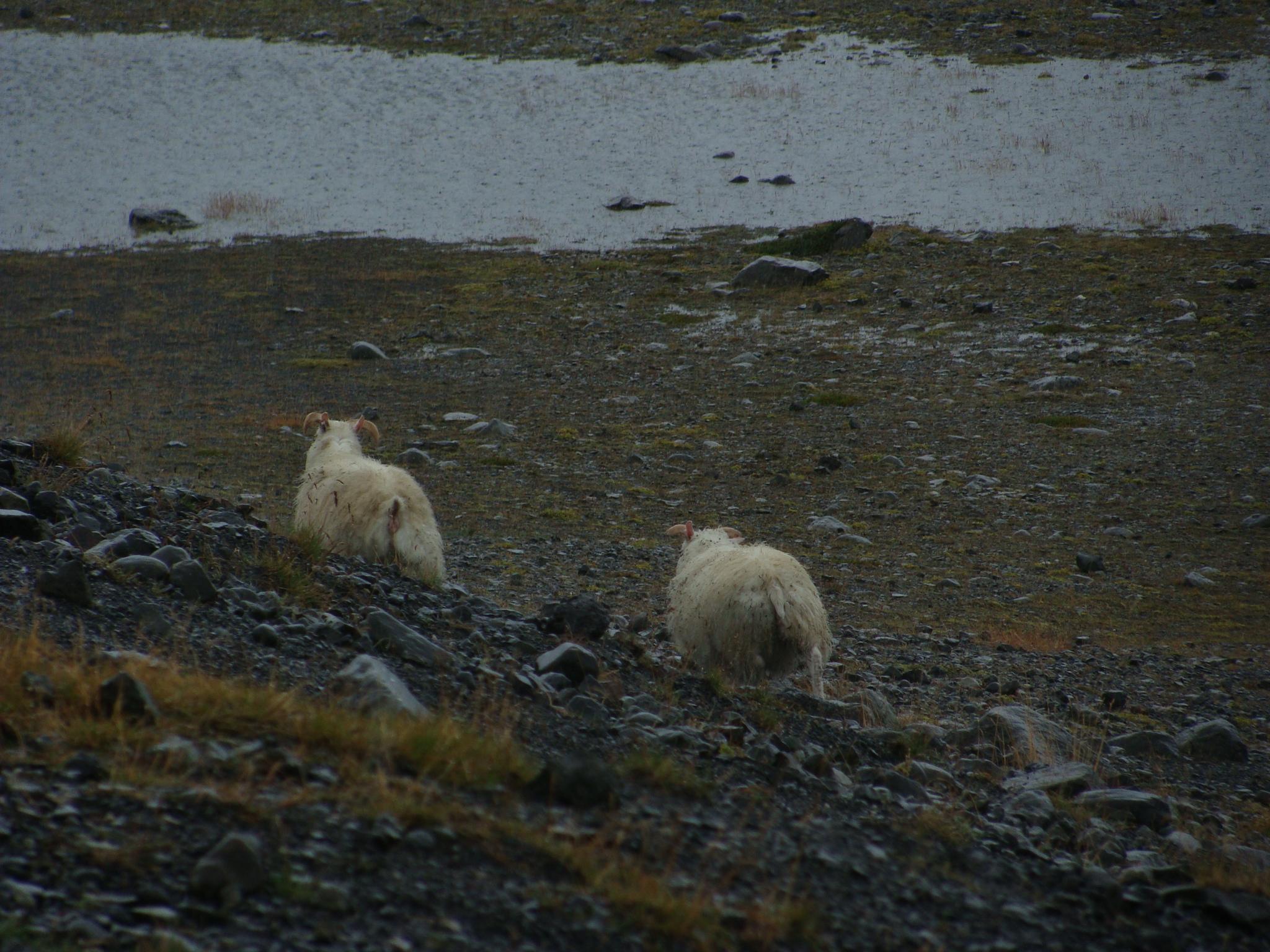 Islandia y la afición por tejer que se extiende/ Iceland and the love of knitting that spreads