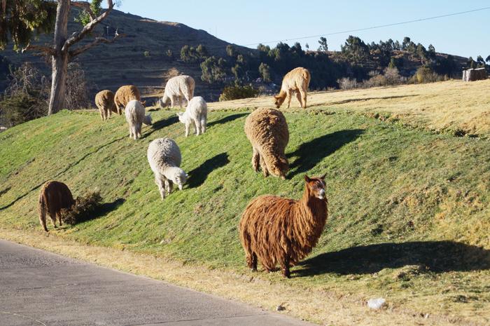 Hotel Libertador Lago Titicaca XII-001