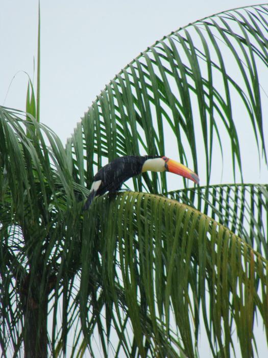 Iguazú V