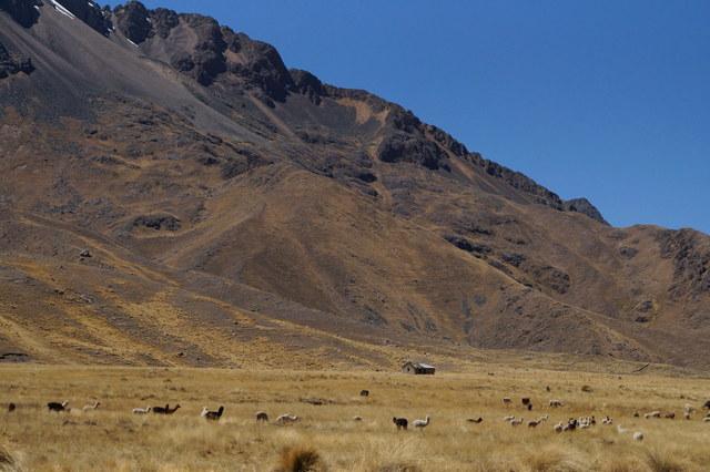 Tren Puno Cusco XIV