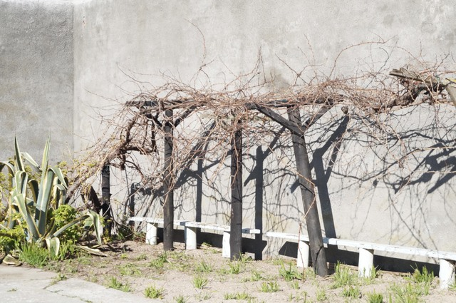 Mandela Robben Island V