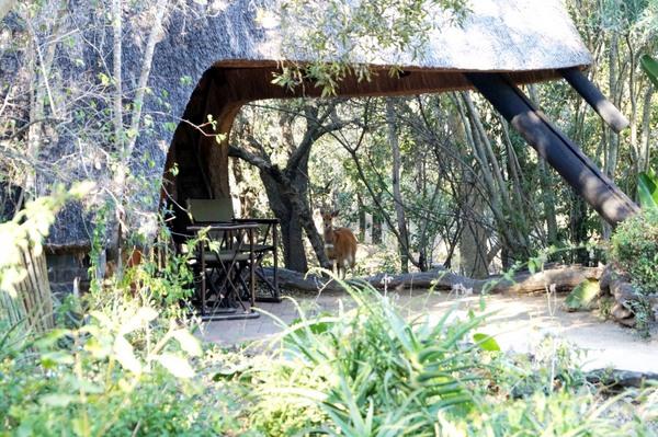 Cheetah Plains XII